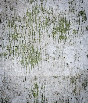Palm ree rinde textur hintergrund