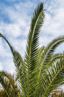 Palm tree leaves in der perspektive