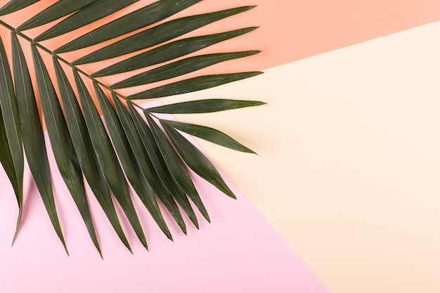 Palmblätter auf farbigem papier. sommerstimmung, tropisch, leer.