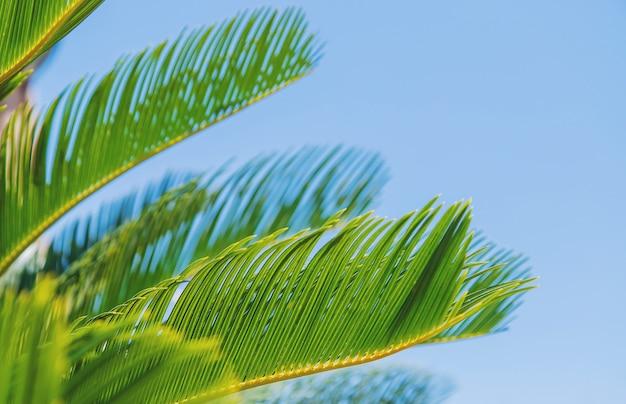 Palmblätter auf himmelhintergrund