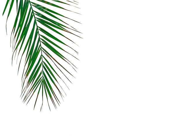 Palmblätter hintergrund tropisch