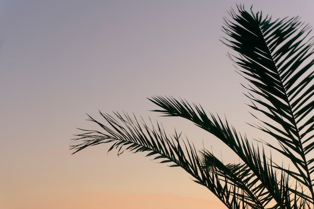 Palmblätter hintergrund
