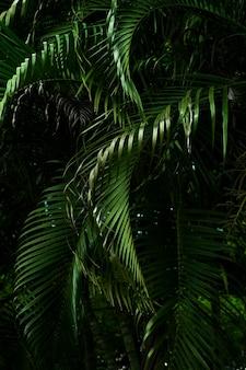 Palmblätter im dunklen tonhintergrund