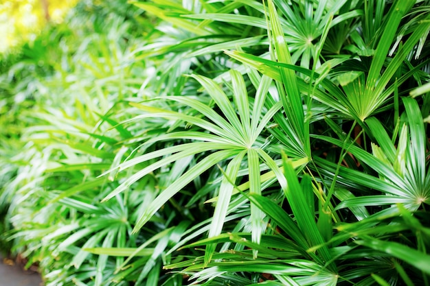 Palmblätter im park.