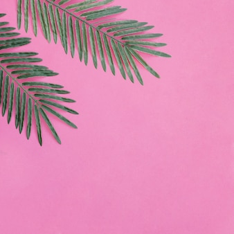 Palmblätter in der oberen linken ecke mit platz auf der rechten seite