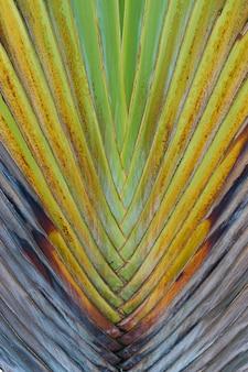 Palmblätter nahaufnahme