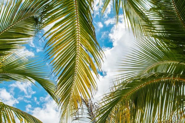 Palmblätter über hintergrund des blauen himmels