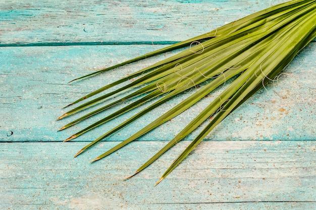 Palmblatt auf einem trendigen türkisfarbenen hölzernen hintergrund