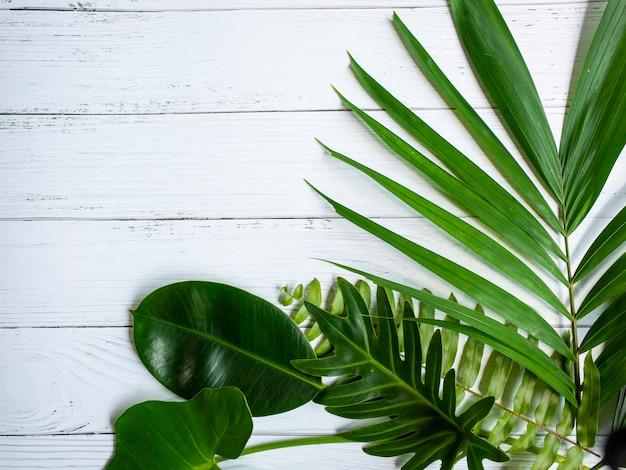 Palmblatt auf weißem holz tisch