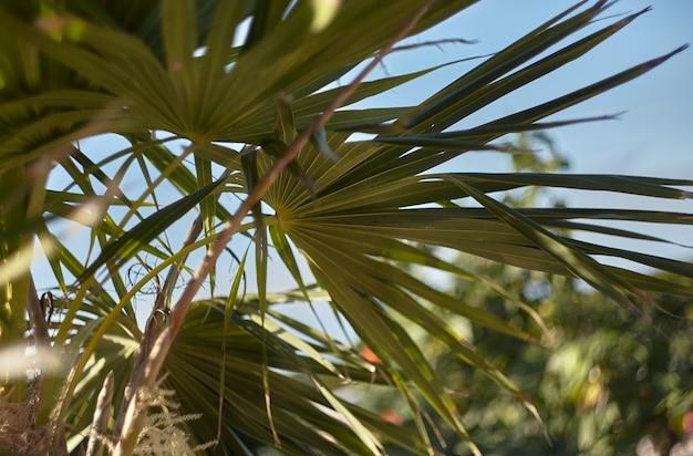 Palmblatt beleuchtet von einem sonnenstrahl im herzen des waldes im herzen des waldes