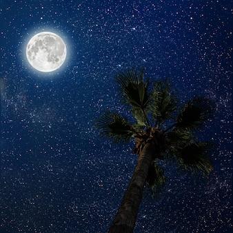 Palme am nachthimmel mit sternen und mond. elemente dieses von der nasa bereitgestellten bildes