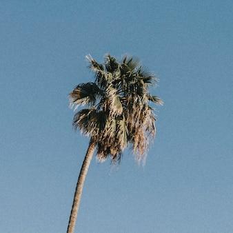 Palme am strahlend blauen himmel