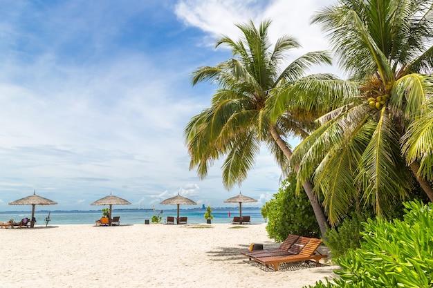 Palme am tropischen strand auf den malediven