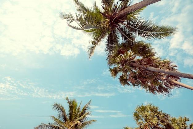 Palme am tropischen strand mit blauem himmel und sonnenlicht im sommer, aufsteigender winkel. vintage instagram filtereffekt