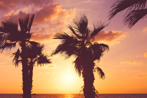 Palme auf dem strand gegen bunten sonnenunterganghimmel mit wolken. schöne natur . sommerurlaub