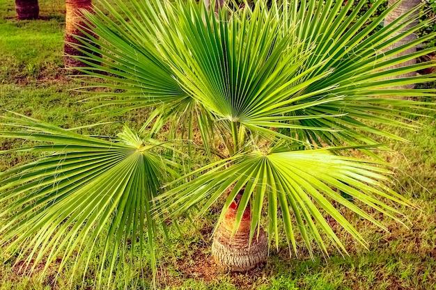 Palme auf der natur durch den seepoolhintergrund