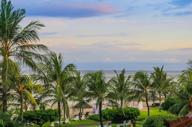 Palme auf grünem naturhintergrund