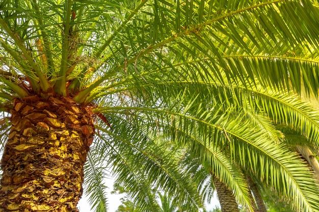 Palme auf hintergrund des himmels