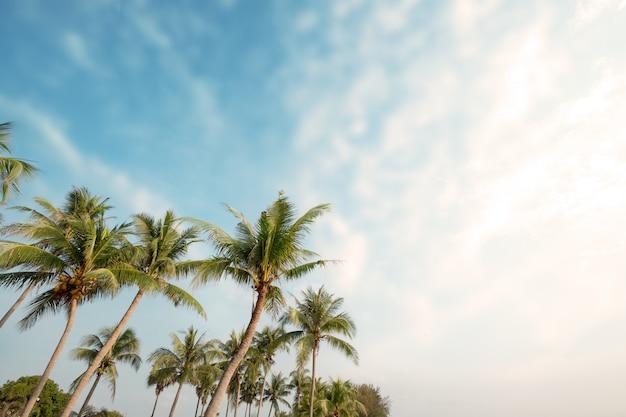 Palme auf tropischem strand mit blauem himmel und sonnenlicht im sommer