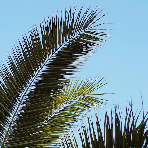 Palme blätter im frühling