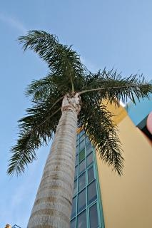 Palme, gebäude