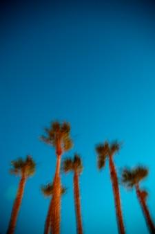 Palme gegen blauen himmel