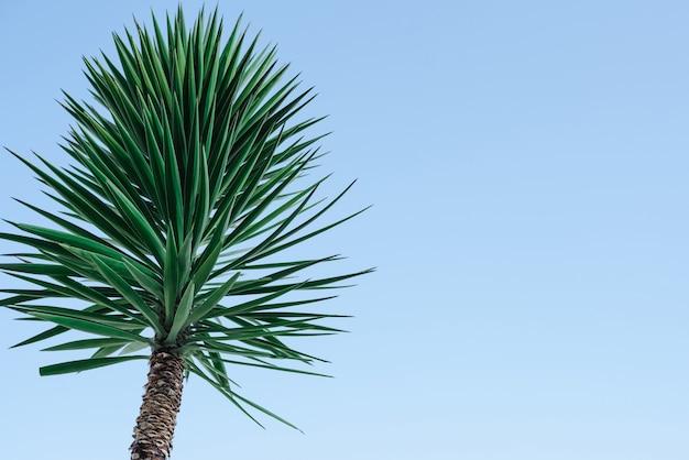 Palme gegen den himmel textur mit palmblättern palm