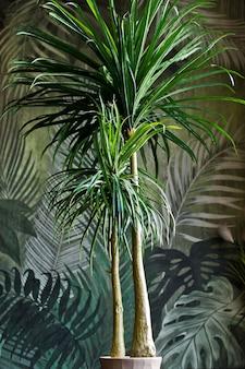Palme im topf, zimmerpflanze. design, interieur, minimalismus. seitenansicht