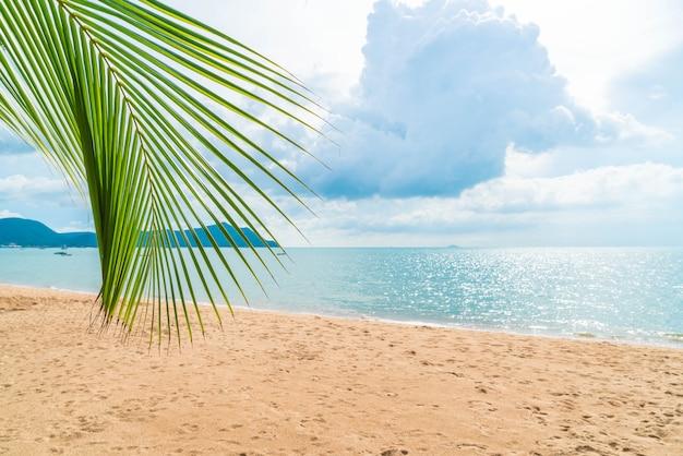 Palme mit leerem strand