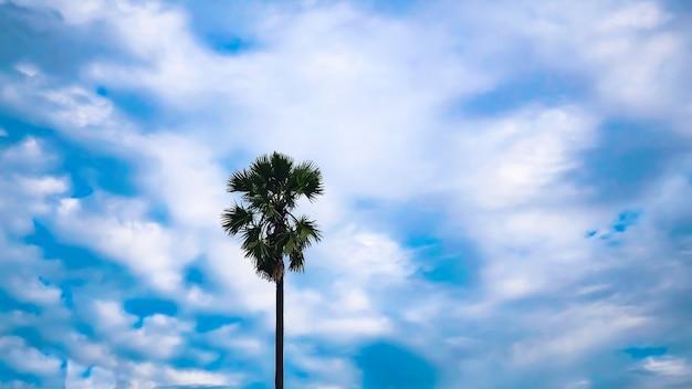 Palme silhouette gegen den himmel