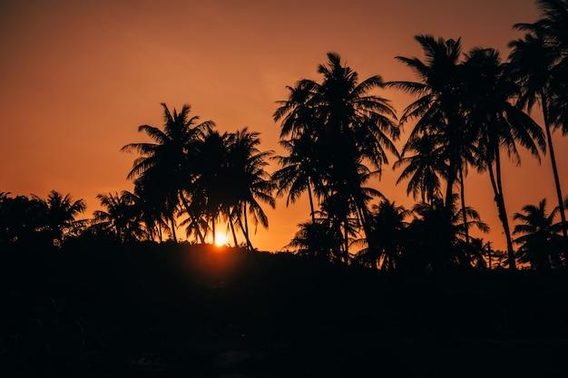 Palme silhouetten