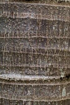 Palme stamm textur hintergrund