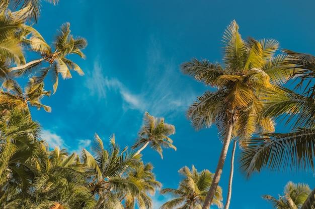 Palme und blauer himmel.