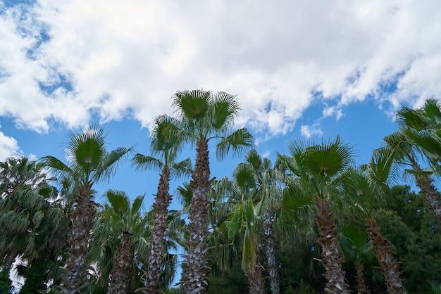 Palme und himmelhintergrund