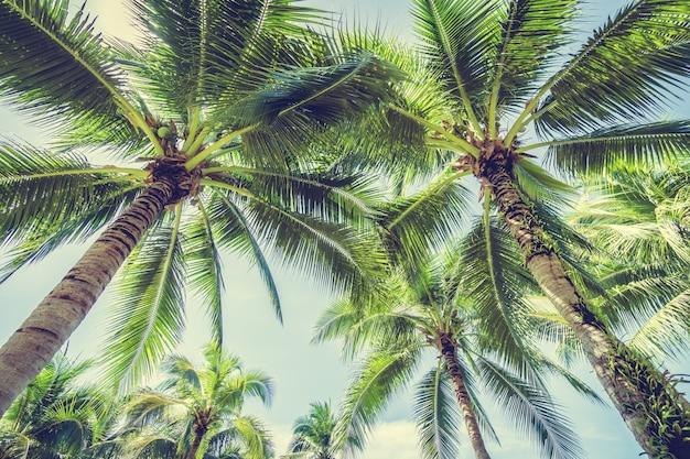 Palme von unten gesehen