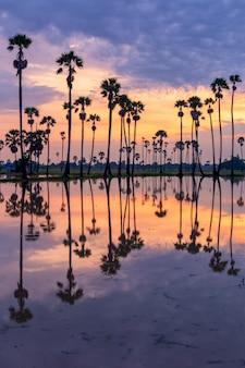 Palme während der sonnenaufgangzeit