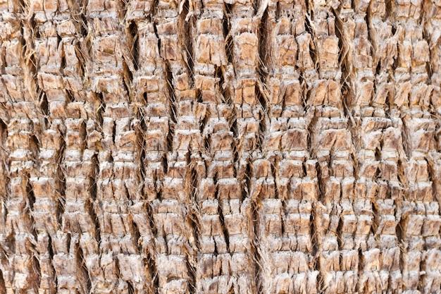 Palmebarkebeschaffenheitshintergrund am sonnigen tag