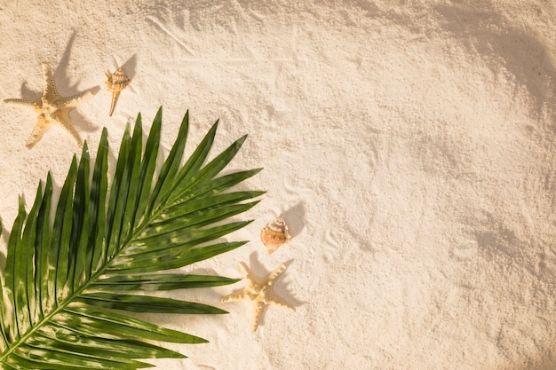 Palmeblatt auf sand