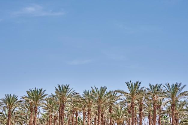 Palmen am strand meer. touristische saison