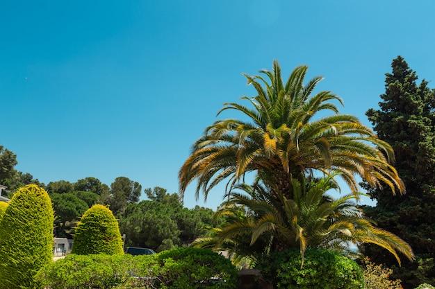 Palmen auf blauem himmel und weißen wolken. kopieren sie platz