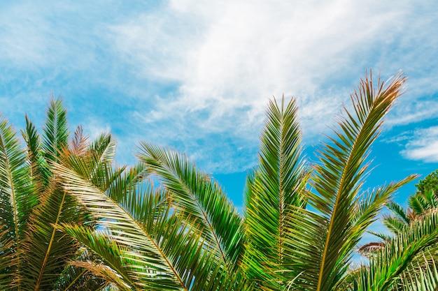Palmen auf blauem himmel und weißen wolken