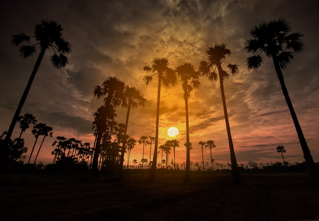 Palmen auf dem gebiet während einer frühen schönen dämmerung mit buntem himmel