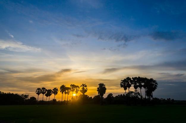 Palmen auf dem hintergrund eines schönen sonnenuntergangs
