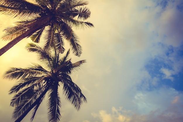 Palmen bei sonnenuntergang mit wolken hintergrund
