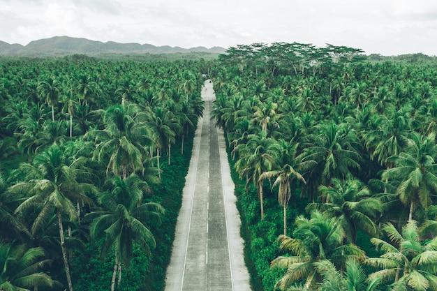 Palmen-dschungel auf den philippinen. konzept über fernweh tropische reisen.