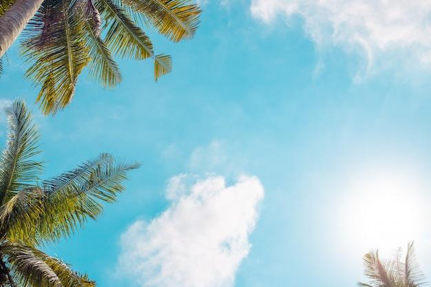 Palmen gegen blauen himmel, sommerhintergrund der tropischen insel, platz mit kopienraum
