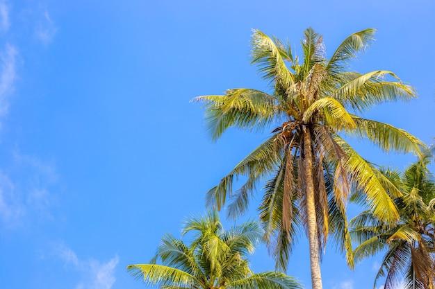 Palmen gegen blauen himmel, sommerhintergrund der tropischen insel