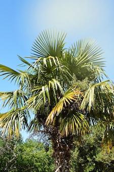 Palmen gegen blauen himmel und helles sonnenlicht
