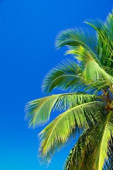 Palmen gegen blauen himmel