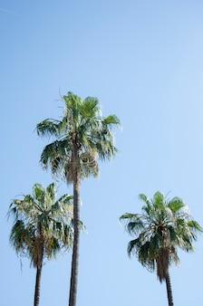 Palmen gegen einen blauen himmel.